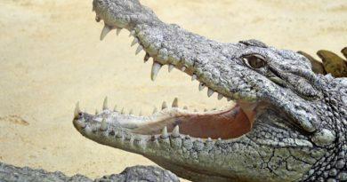 Krokodyle zjadły dziewczynkę